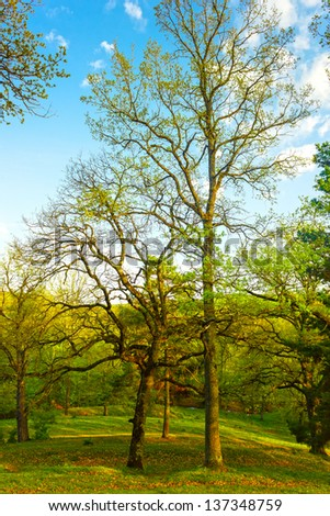 Beautiful spring landscape with trees at sunset in park