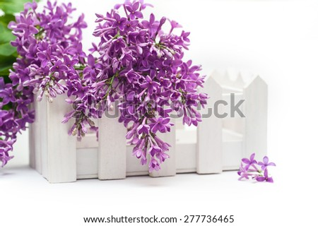 Beautiful spring lilac and a small fence on the white background. - stock photo
