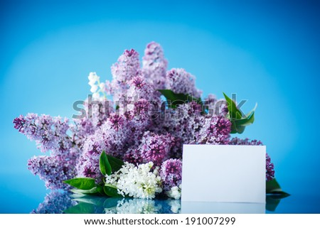 beautiful spring lilac on a blue background