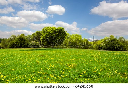 Beautiful spring meadow - stock photo