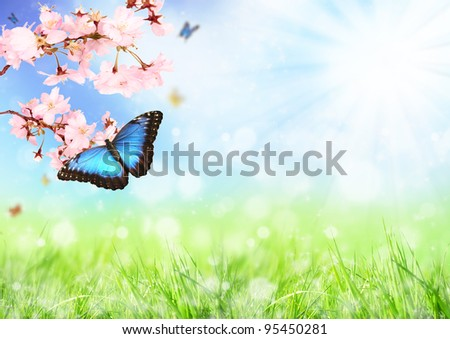 Beautiful spring meadow with exotic butterfly on blooming branch - stock photo