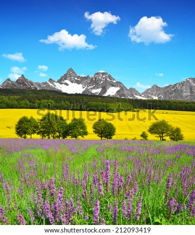 Beautiful spring mountain landscape with flowering meadow - stock photo