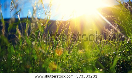 Beautiful spring nature landscape - Alpine meadow. Grass closeup with sunbeams. Beautiful Nature landscape with sun flare - stock photo