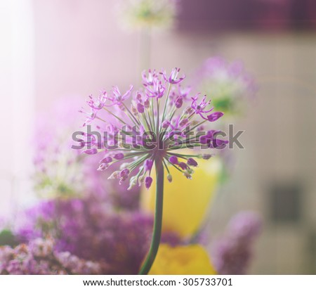 Beautiful spring purple flowers on the home window with soft light - stock photo