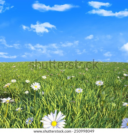 Beautiful spring shot with daisy flowers. - stock photo
