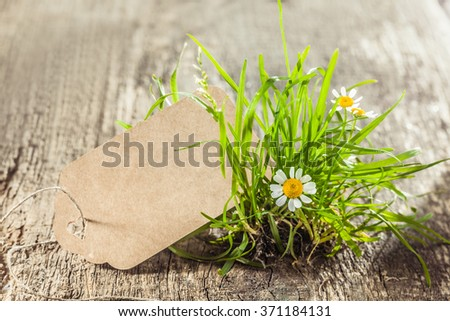 Beautiful Spring sign or tag with grass. Daisies and tuft of grass with an empty sign for your conceptual work like cards or advertisement. - stock photo