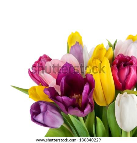 beautiful spring tulips flowers - stock photo