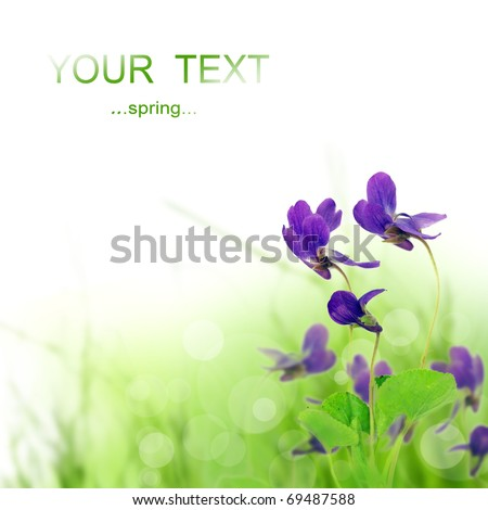 Beautiful spring violet flower - stock photo