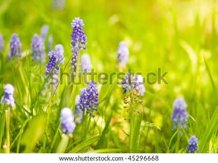Beautiful spring wildflowers in sunlight - stock photo