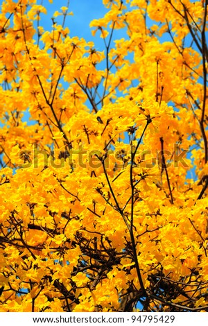 Beautiful spring yellow flower on blue sky. - stock photo