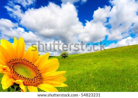 Beautiful springtime - stock photo