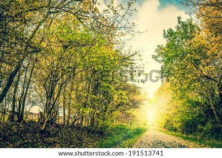 Beautiful springtime landscape in warm colors - stock photo