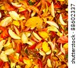 Beautiful square background image of vibrant autumn leaves - stock photo