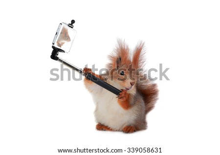 beautiful squirrel taking a selfie together with smartphone camera - stock photo