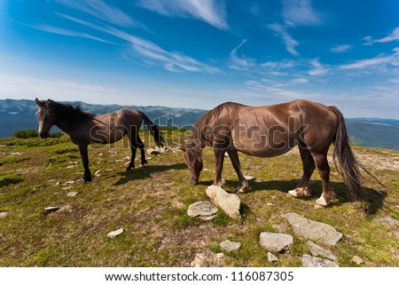 Beautiful stallions on the green meadow, with deep blue sky. - stock photo
