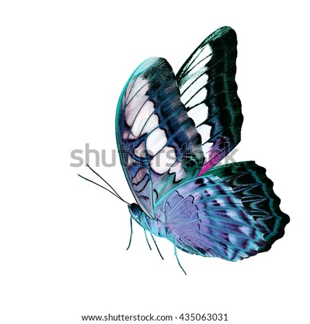 Beautiful standing camouflage pale green and pink buttefly, the Clipper Butterfly (Parthenos sylvia) with fully wings sweeping isolated on white background