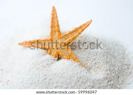 Beautiful starfish on bright white sand. - stock photo