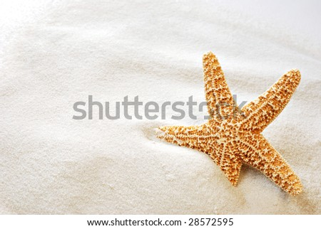 Beautiful starfish on bright white sand.  Macro with copy space included. - stock photo