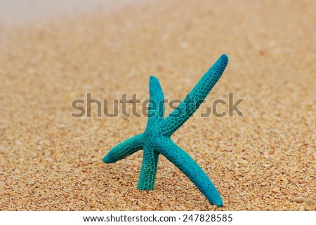 Beautiful starfish on the beach on the theme vacation - stock photo