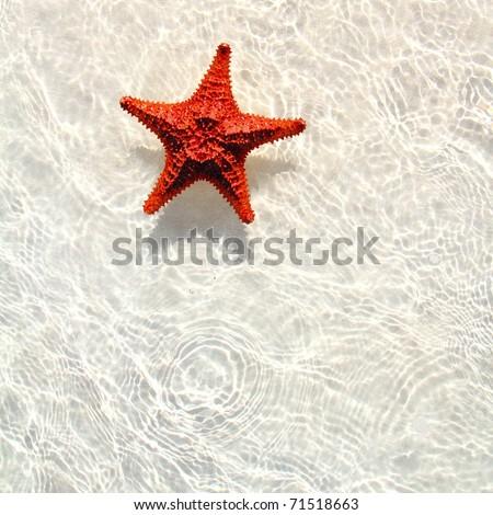 beautiful starfish orange in wavy shallow water - stock photo