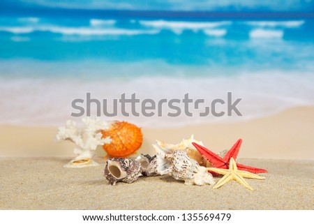 Beautiful starfishes, cockleshells and coral on sand against the sea - stock photo