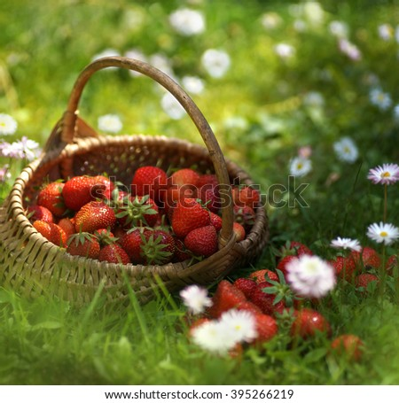 Beautiful strawberries in basket on grass. - stock photo
