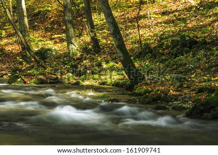 Beautiful stream in the forest in autumn - stock photo