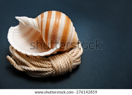 Beautiful striped and spiral seashell lies on coil of rope over dark background. - stock photo