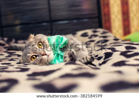 beautiful striped cat with a green bow  - stock photo