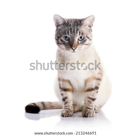 Beautiful striped cat with blue eyes. Striped cat. Striped not purebred kitten. Small predator. Small cat. - stock photo