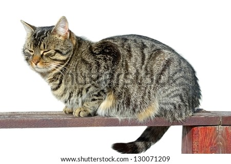 beautiful striped kitten relaxing up on a wooden fence - stock photo