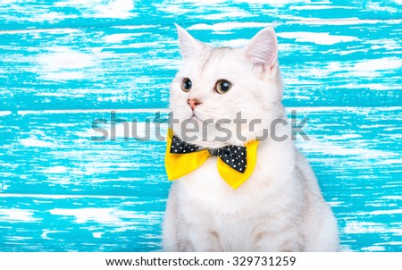 Beautiful stylish purebred cat. Animal portrait. Purebred cat is sitting. Brown background. Colorful decorations. Collection of funny animals - stock photo