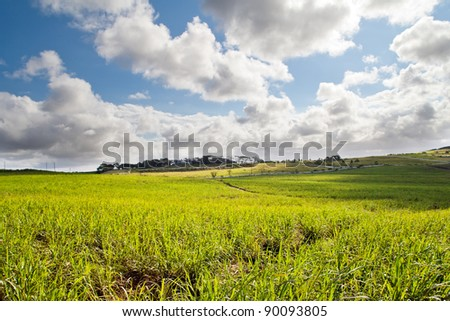 beautiful sugar cane field in Durban, South Africa - stock photo