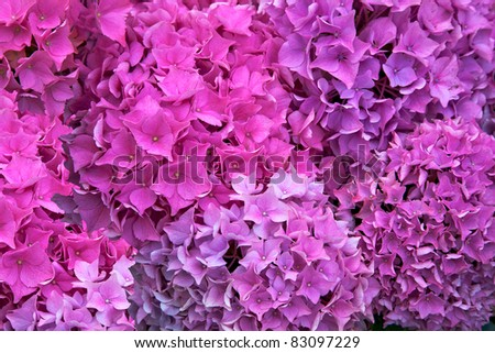Beautiful summer bunch of flowers. - stock photo
