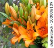 Beautiful summer bunch of flowers. Floral pattern. Lilys. - stock photo