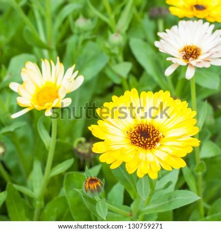Beautiful summer bunch of flowers. Gerberas. - stock photo