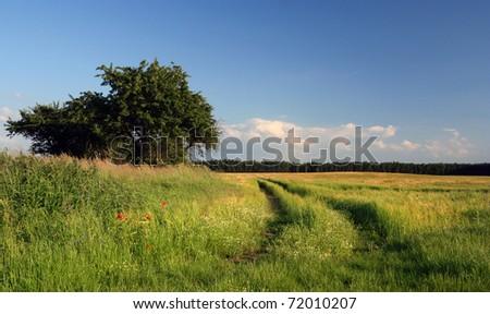 beautiful summer countryside - stock photo