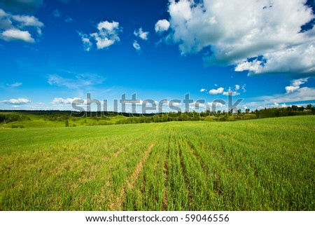beautiful summer day landscape