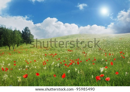 Beautiful summer field with red poppies and white flowers - stock photo