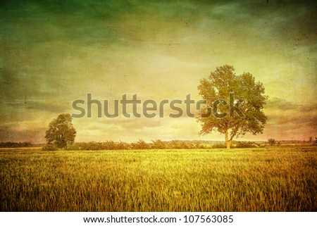 Beautiful summer fields of wheat with dramatic sky - stock photo