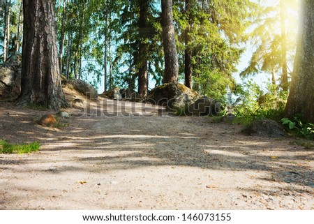 Beautiful summer forest mountain path at sunset - stock photo