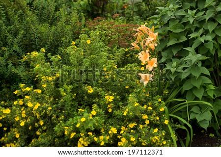 beautiful summer garden - stock photo