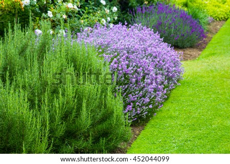Beautiful, summer garden with blooming lavender and various plants