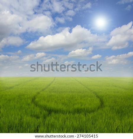 Beautiful summer landscape. - stock photo