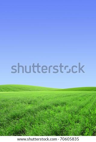 Beautiful summer landscape. A green field, blue sky - stock photo