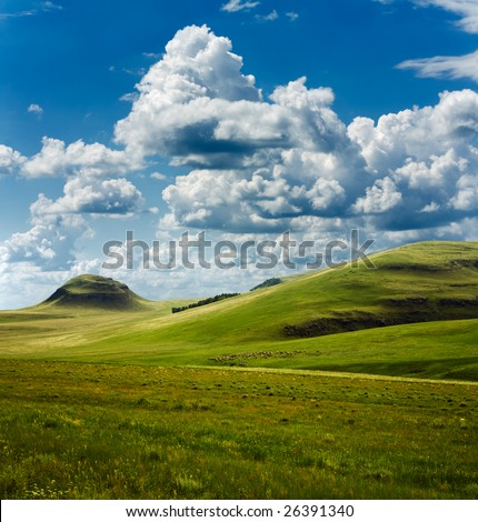 beautiful summer landscape and herd of cows