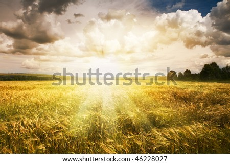 beautiful summer landscape and  sky - stock photo