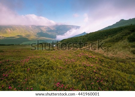 beautiful summer landscape in America  mountains , Tennessee,  national park, USA, America