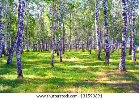 Beautiful summer landscape in birch grove