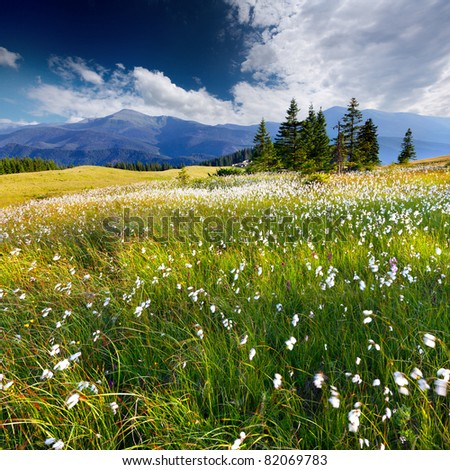 Beautiful summer landscape in the  mountains with a feather grass - stock photo